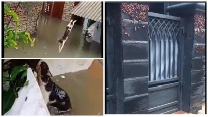 Viral Video Hewan-hewan Turut Jadi Korban Banjir Jakarta, Kucing Berenang, Koloni Kecoa Mengungsi