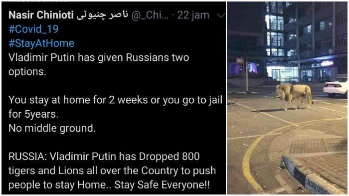 Viral Kabar Vladimir Putin Lepas 800 Singa agar Warga Rusia Patuh Lockdown, Ternyata Hoaks!