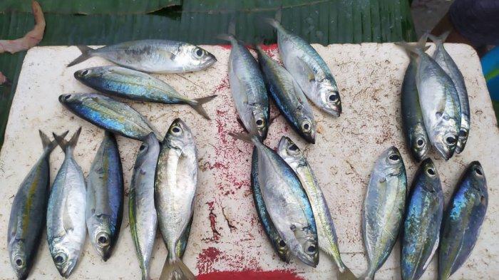 Cuaca Buruk, Harga Ikan di Pasar Mardika Naik Hingga Rp 150 Ribu Karena Pasokan Berkurang