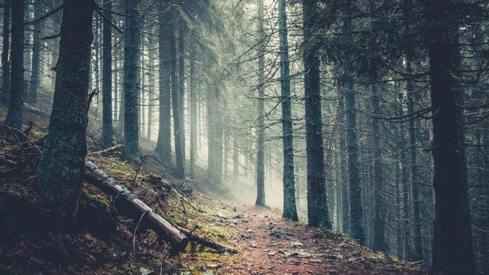 Cari Kayu Bakar di Hutan, Pria 59 Tahun Hilang Sejak Senin, Tim SAR Kerahkan 150 Relawan
