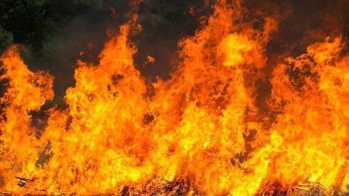 Kebakaran Hutan dan Lahan di Maluku Menjalar Dekati Gudang Penyimpanan Bahan Peledak