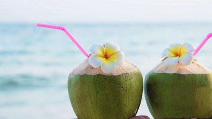 Ilustrasi kelapa hijau