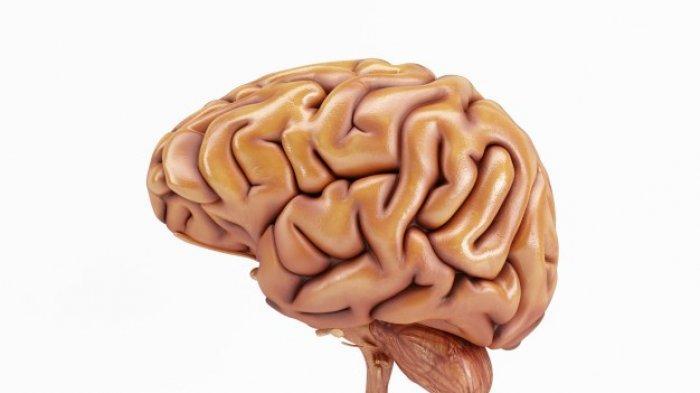 Makanan yang Membantu Meningkatkan Kemampuan Otak, dari Telur hingga Jamur