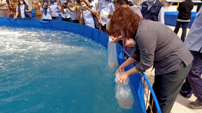 Di Tengah Pandemi, Ambon Mulai Budidaya Udang dan Ikan Nila dengan Kolam Bioflok
