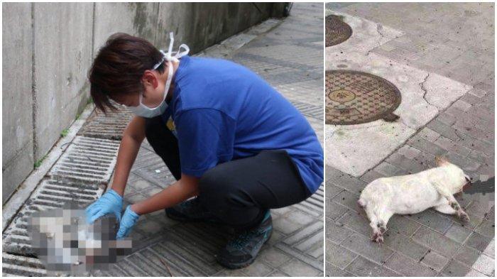 25 Hewan Peliharaan Dilempar dari Gedung Tinggi di Hong Kong, Diduga Pemilik Takut Tertular Corona