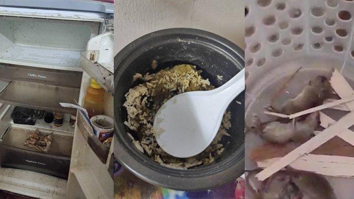 Viral Rumah Kontrakan Kotor Ditinggal Pulang Kampung 4 Bulan, Bau Bangkai hingga Air Kencing Tikus