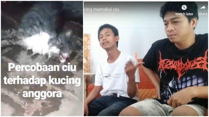 Viral Video Kucing Dicekoki Miras, Perekam Klarifikasi: Hanya Beri Air Kelapa karena Keracunan