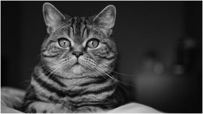 Viral Kakek Bantai Kucing untuk Dikonsumsi, Akui untuk Obati Darah Tinggi