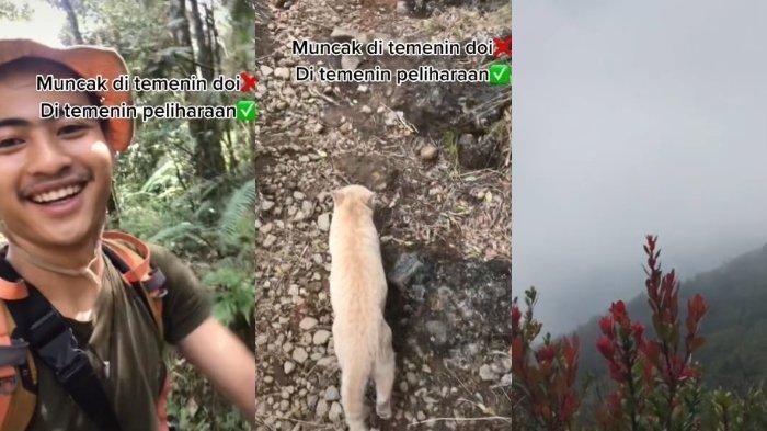 Pemuda ini Mendaki Gunung Ditemani Seekor Kucing, Videonya Viral