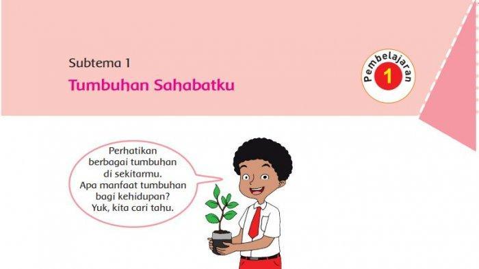 Kunci Jawaban Buku Tematik Tema 1 Kelas 6 SD Subtema 1: Tumbuhan Sahabatku, Halaman 2-16