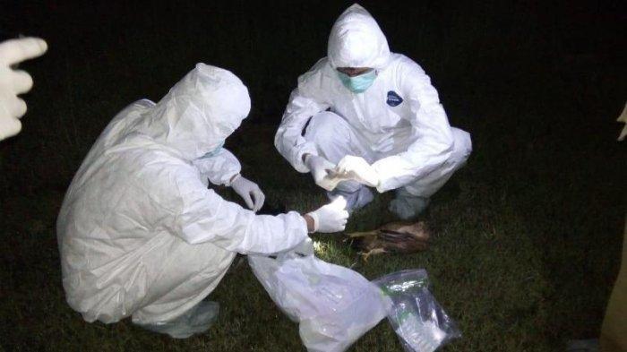 Sejumlah Hewan Peliharaan Mati Mendadak di Bekasi, Polisi Sebut karena Keracunan