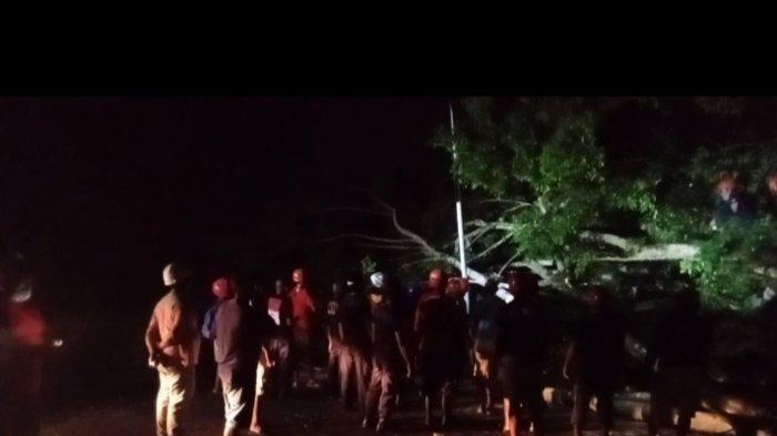 Pohon Tumbang, Arus Lalu Lintas Menuju Nusaniwe Dialihkan