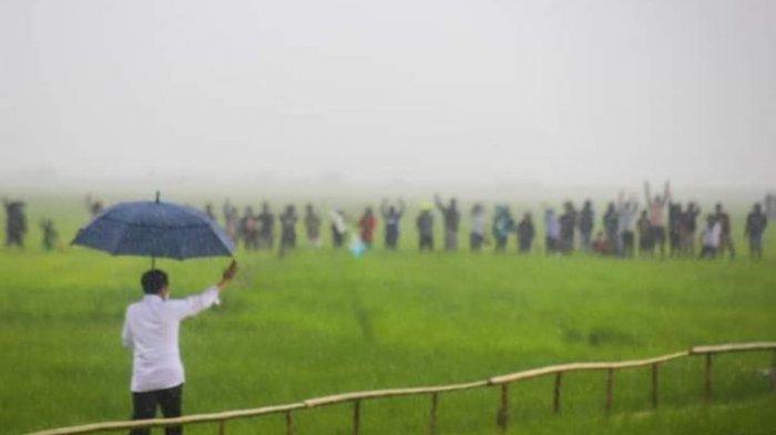 Viral Jokowi Berjalan sambil Pegang Payung saat Hujan, Pengunggah Mengaku Kaget dan Bangga