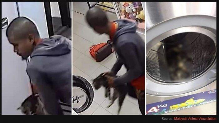 VIRAL Pria Bunuh 3 Kucing dengan Memasukkannya ke Mesin Cuci, Aksinya Terekam CCTV