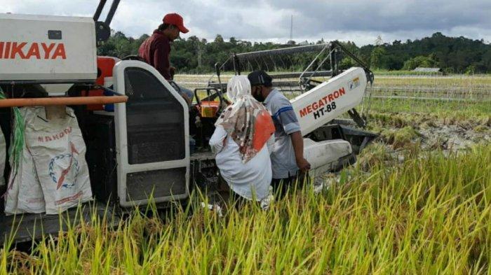 Angka Stunting di Maluku Capai 30 Persen, Saadiah Uluputty Minta Tambah Varietas Padi IR Nutri Zink