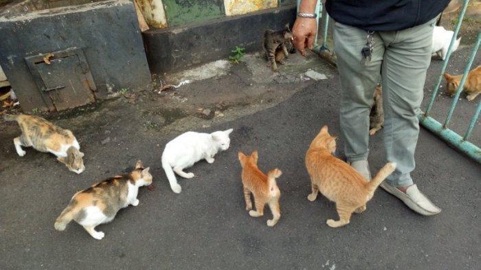 VIRAL Satpam Rutin Beri Makan Kucing Liar: Kalau Uangnya Sedikit, Saya Puasa, Mereka yang Makan