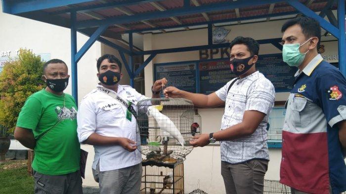 Polres Pulau Buru Amankan 42 Satwa Lindung dari Warga Waekasar