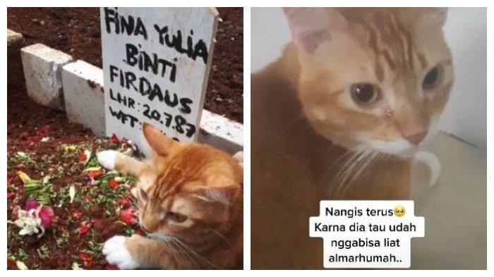 Viral Video Kucing Tangisi Kematian Majikannya, Baru Berhenti Menangis saat Diajak Ziarah ke Makam