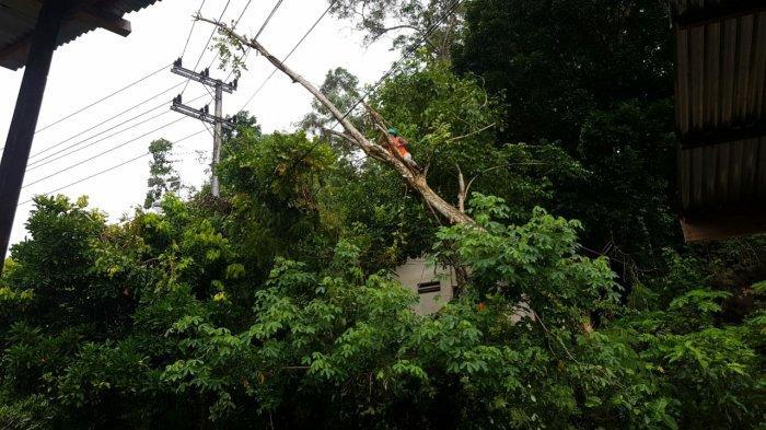 PLN Gerak Cepat Pulihkan Kelistrikan Pasca Pohon Tumbang di Ahuru