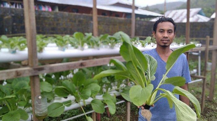 Kewang Hidroponik Ambon, Buktikan Cara Berkebun Bebas Kotor, Mudah dan Menjanjikan