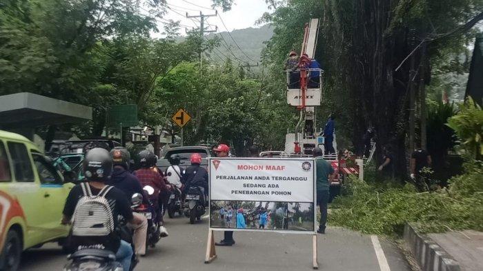 Disdamker Pangkas Puluhan Pohon di Jalanan Kota Ambon