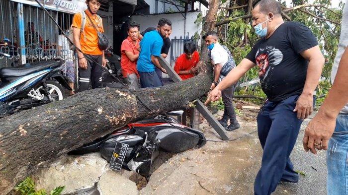 Angin Kencang, Pohon Tumbang di Jalan Tulukabessy Timpa Satu Unit Motor