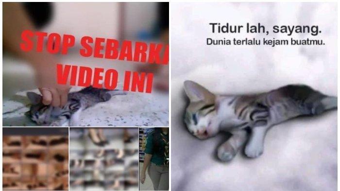 Viral 3 Perempuan Injak Kucing Sampai Mati Ternyata Video Lama, Pelaku Diketahui Kelainan Jiwa