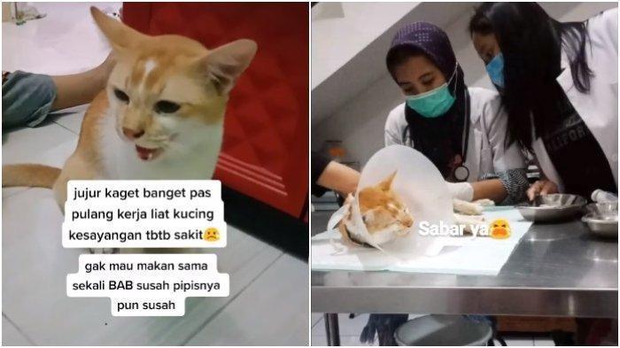 Viral Seekor Kucing Tiba-tiba Kesakitan, Ternyata Perut Bengkak Ditendang Tetangga