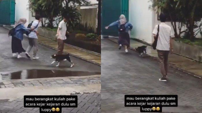 Viral Video TikTok Mahasiswi Dikejar-kejar Anjing, Ini Klarifikasi Annisa