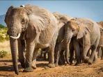 24102021-gajah.jpg
