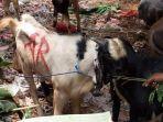 dagangan-hewan-kurban-milik-pedagang-haji-mustaim-di-sekitar-kawasan-rawabelong.jpg
