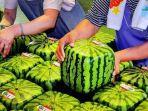 semangka-kotak.jpg