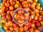 tomat-mardika87.jpg