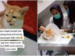 viral-seekor-kucing-peliharaan-ditendang-tetangga-hingga-kesakitan-dan-dirujuk-ke-rumah-sakit.jpg