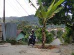 warga-juga-menanam-pohon-pisang-tepat-di-badan-jalan.jpg