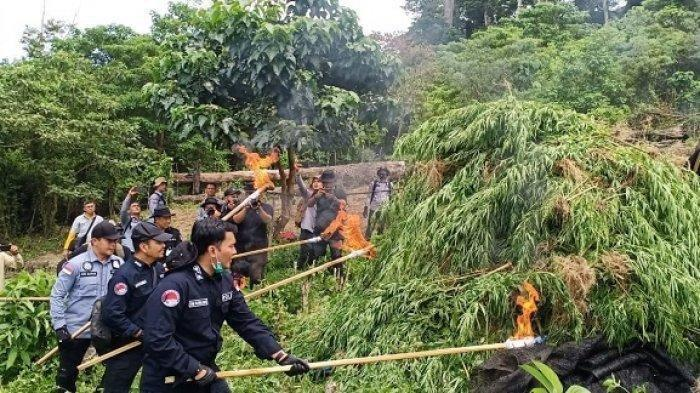 Polisi Ungkap Penyelundup dan Peredaran Ganja, Januari Hingga Mei 2021 BB Seberat 2,1 ton