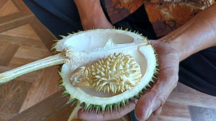 Menengok Lagi Keunikan Durian di Dalam Durian Puding Besar, Apa yang Sebenarnya Terjadi