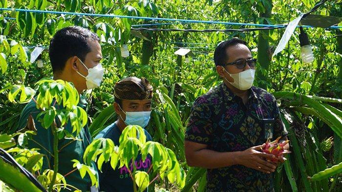 Tingkatkan Produktivitas, Petani di Gianyar Manfaatkan Listrik Percepat Pertumbuhan Tanaman