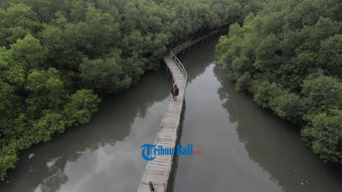Agus Santoso, polisi hutan mengecek kerusakan tempat untuk pejalan kaki di kawasan Hutan Mangrove