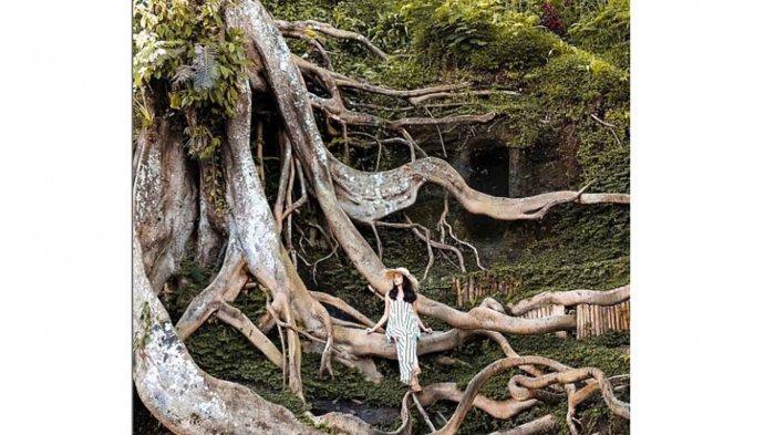 Rekomendasi 7 Tempat Ngabuburit di Gianyar Bali, Pernah ke Akar Raksasa di Munduk Asri?