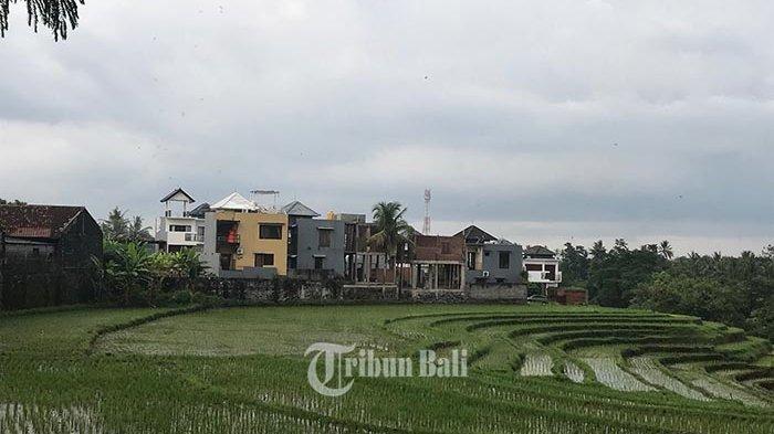 Lahan Sawah di Tabanan Kian Menyusut, Turunnya Debit Air Penyebab Alih Fungsi Lahan