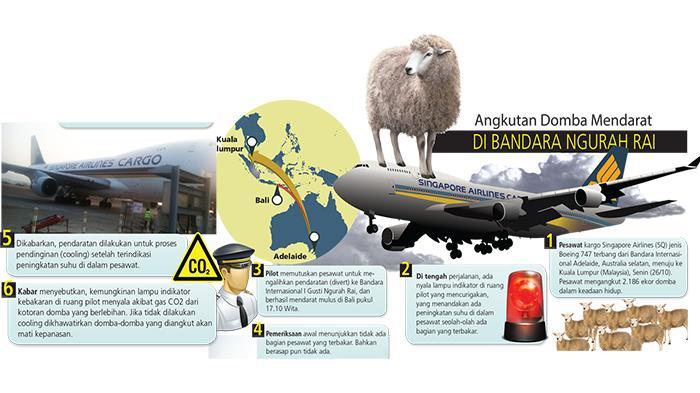 Bringing 2,186 Sheeps, Singapore Cargo Aircraft Made Abrupt Landing