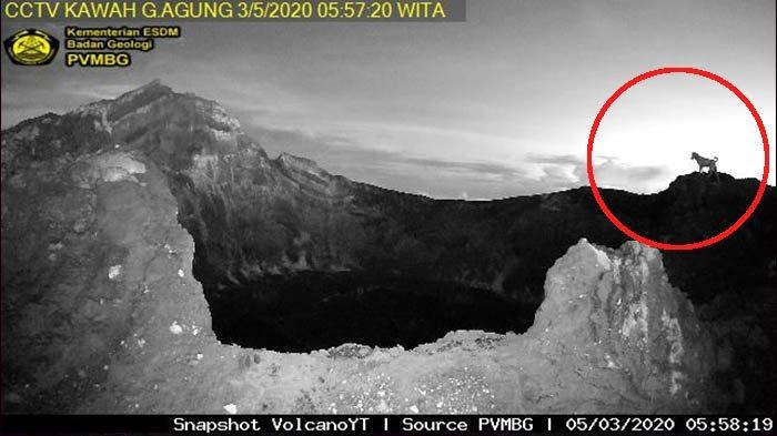 Fenomena Anjing di Puncak Kawah Gunung Agung Terekam Kamera CCTV Viral, Roy Suryo : Saya Percaya