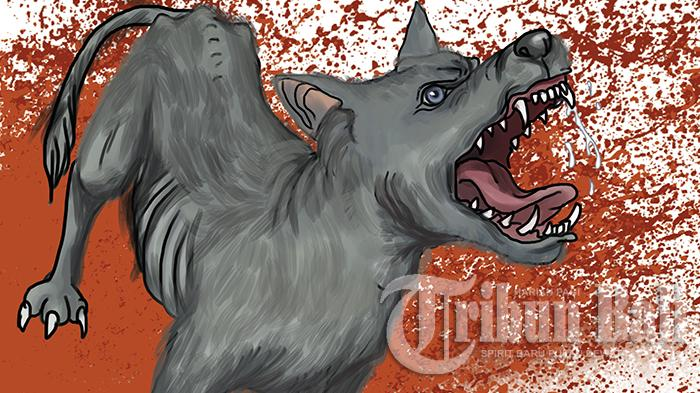 Anjing Serang Warga Secara Membabi-buta di Klungkung, 11 Warga Jadi Korban