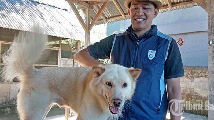 Ras Anjing Kintamani Mendapat Pengakuan Dunia, Kini Seekor Harganya Mencapai Rp 5 Juta