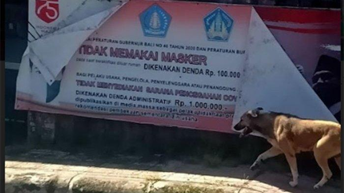 Anjing Liar Tiba-tiba Serang 4 Warga di Tihingan, Dinas Pertanian Klungkung Ambil Sample Otak Anjing
