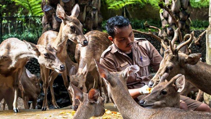 Antisipasi Penyebaran Covid-19, Bali Zoo Tutup Sementara Hingga 31 Maret