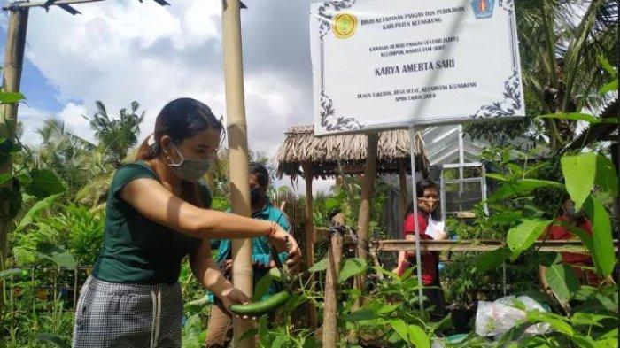 Kelompok Wanita Tani di Dusun Tangkedan Kembangkan Tanaman Organik Di Masa Pandemi