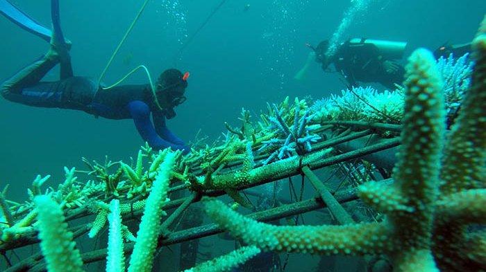 Apa Itu Kabel Bawah Laut, yang Jadi Penyebab Gangguan IndiHome-Telkomsel