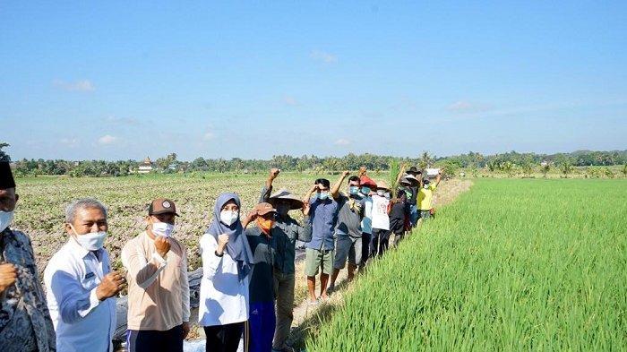 Banyuwangi Luncurkan 'Pas Kontan', Platform Digital Berbagai Layanan Pertanian